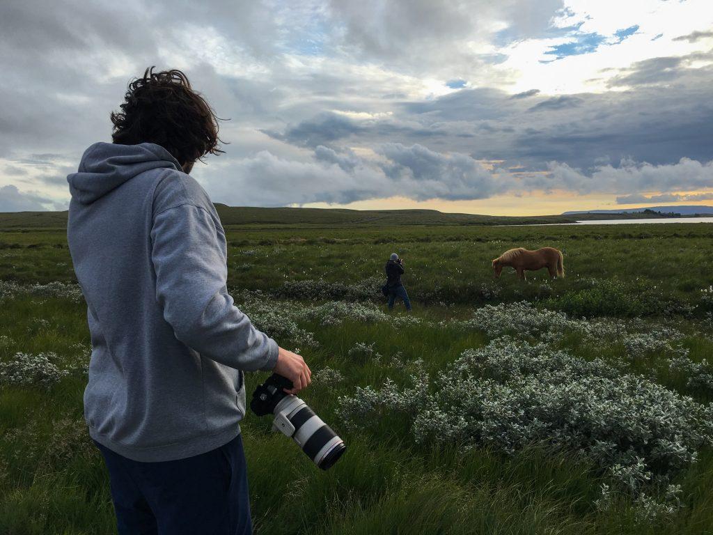 Iceland Travel Photography Horse